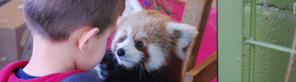 Education-Main_Face to face with a red panda-hi_1800x500
